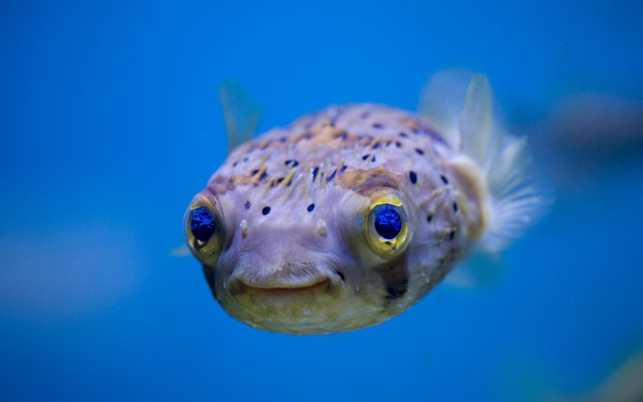 Смешные рыбы