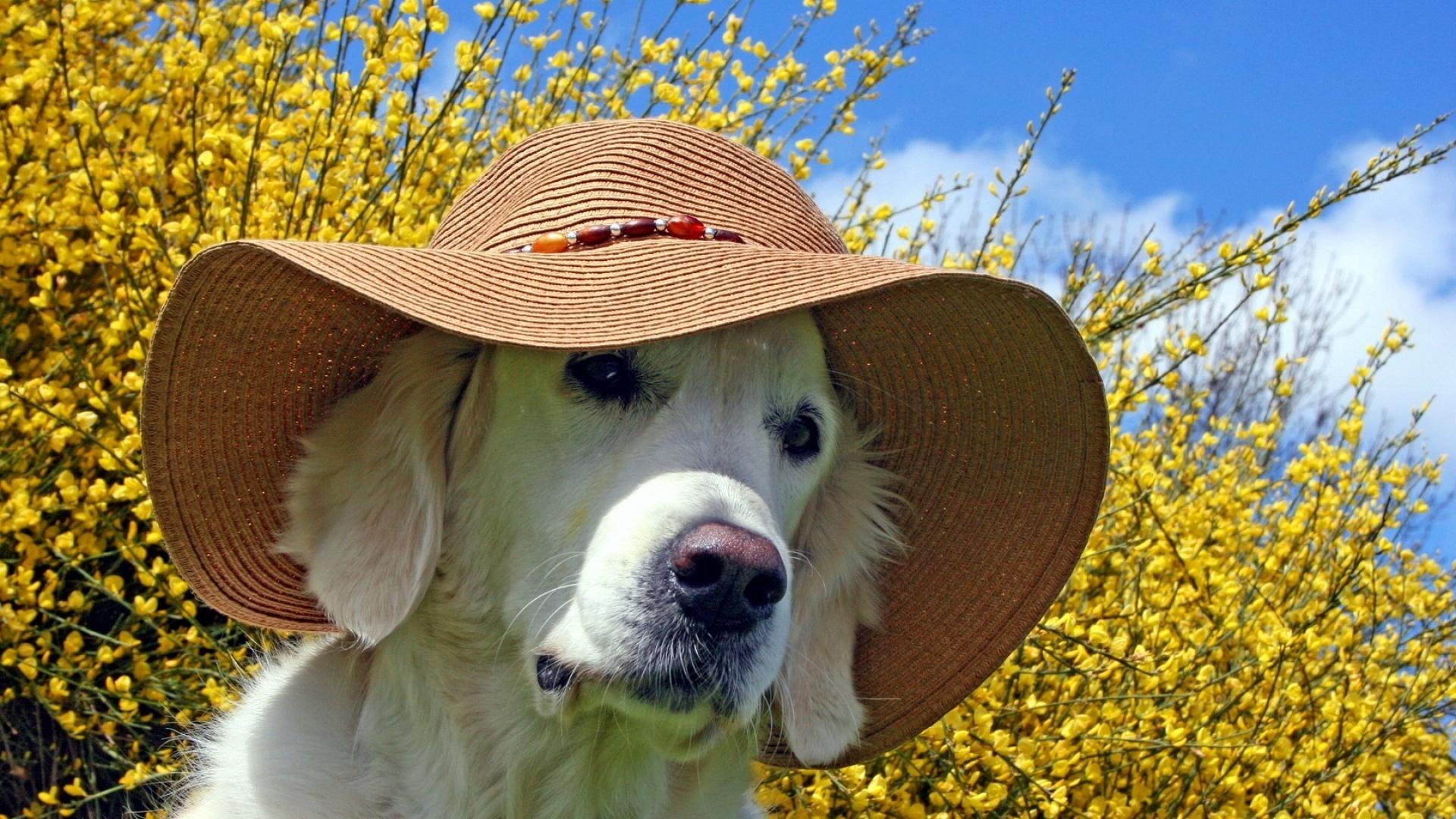 солнышко и собачку картинка главной странице