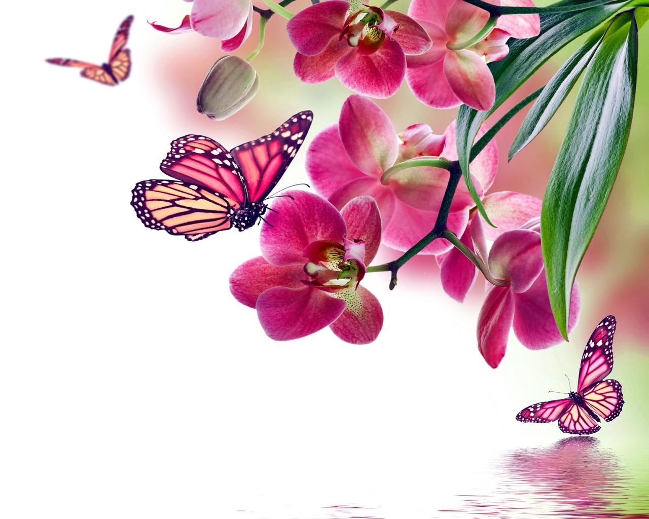 подчеркивает стройные весенние орхидеи открытки фотографии