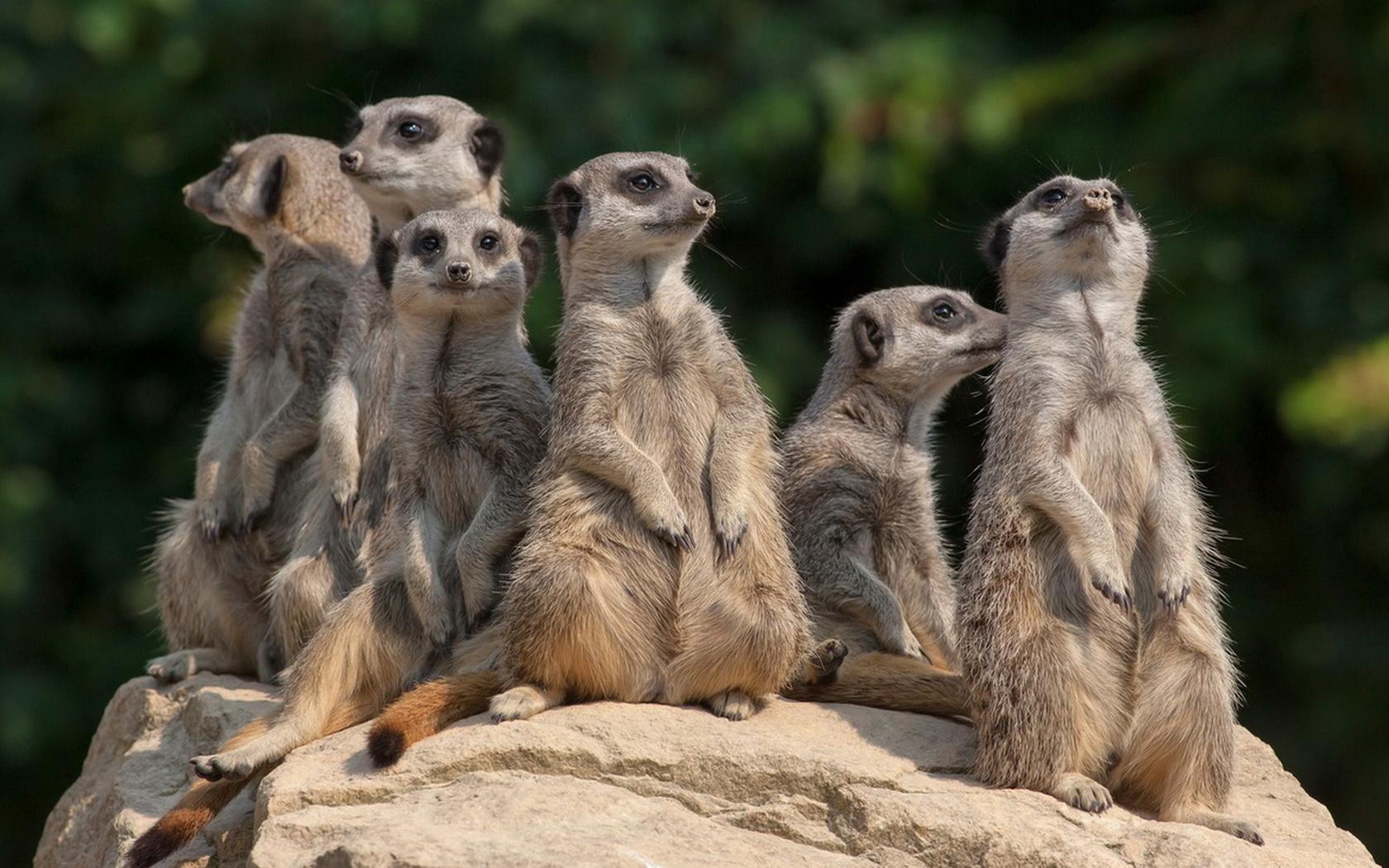 Открытку рамками, картинка семья животные прикольные