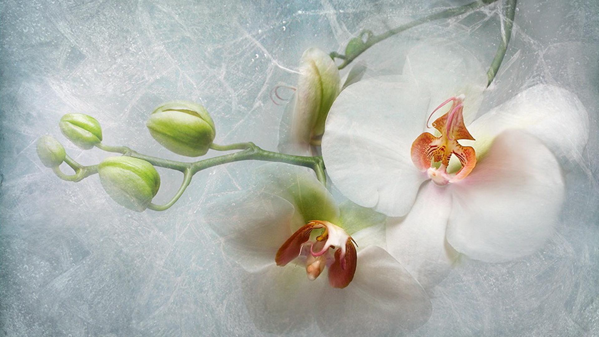 Спасибо коллегам, орхидеи картинки для поздравления