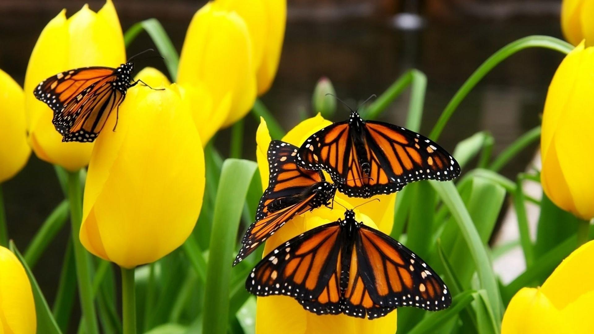тема, весна, красиво, природа