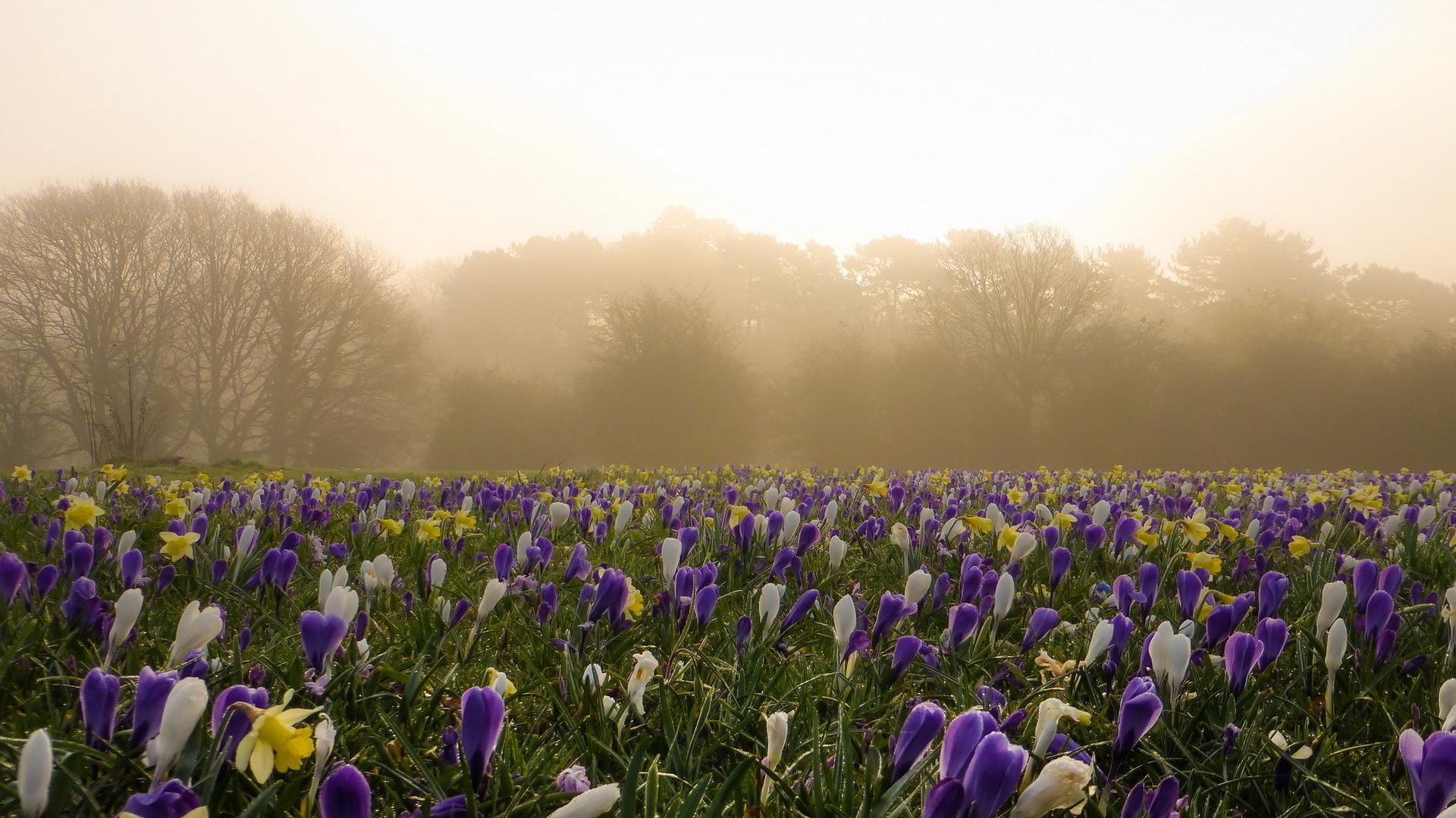 целом, картинки весна утро красота нее целый