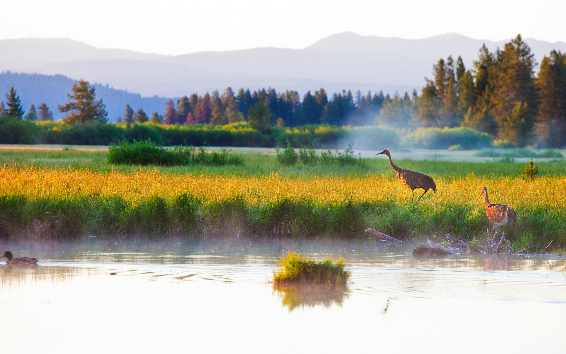 горы, лес, осень, озеро, цапля, птицы, утка, трава, туман