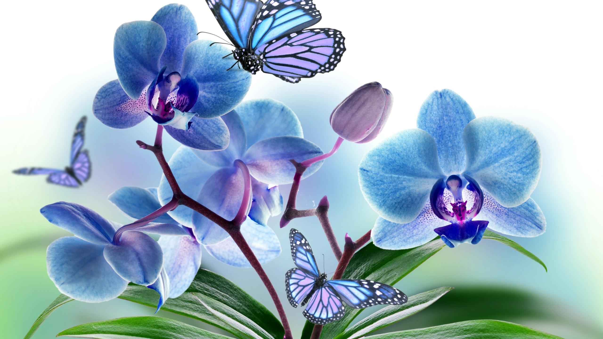 Картинки с цветами для фотопечати, красивая открытка комплект