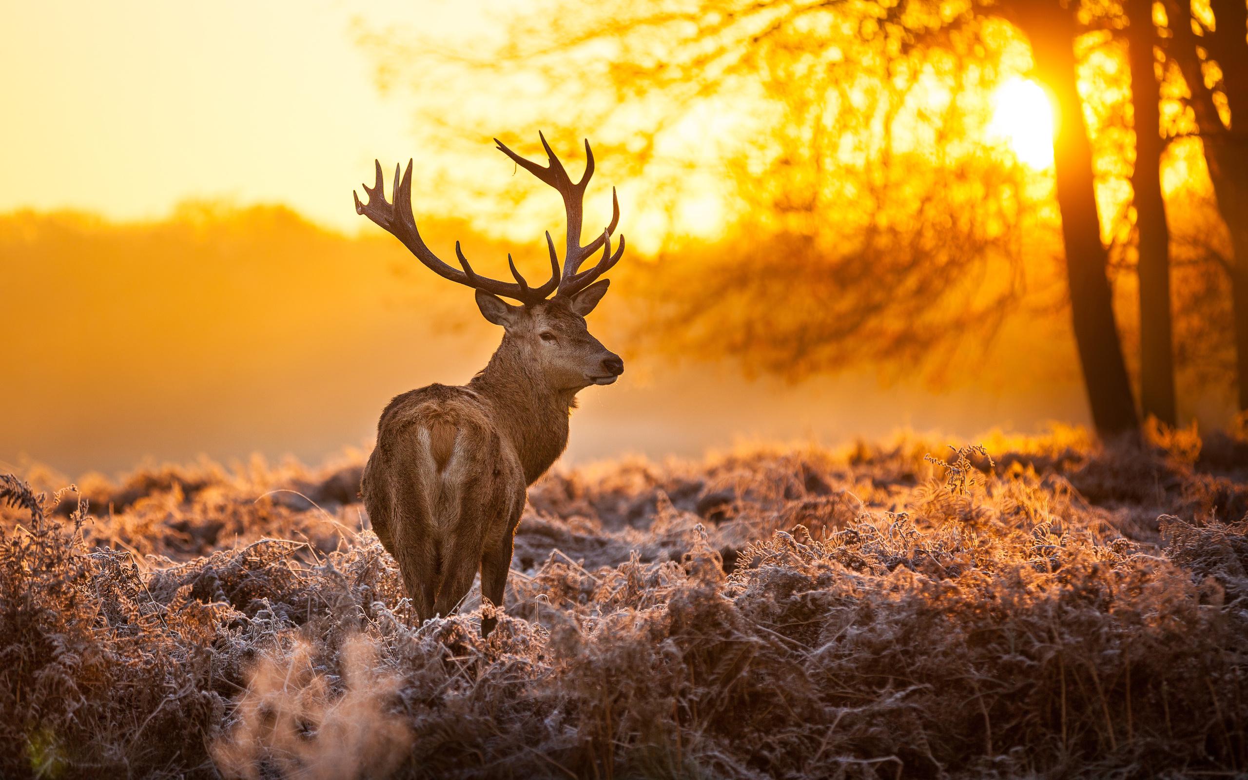 Гузель тебя, картинки про оленей красивые