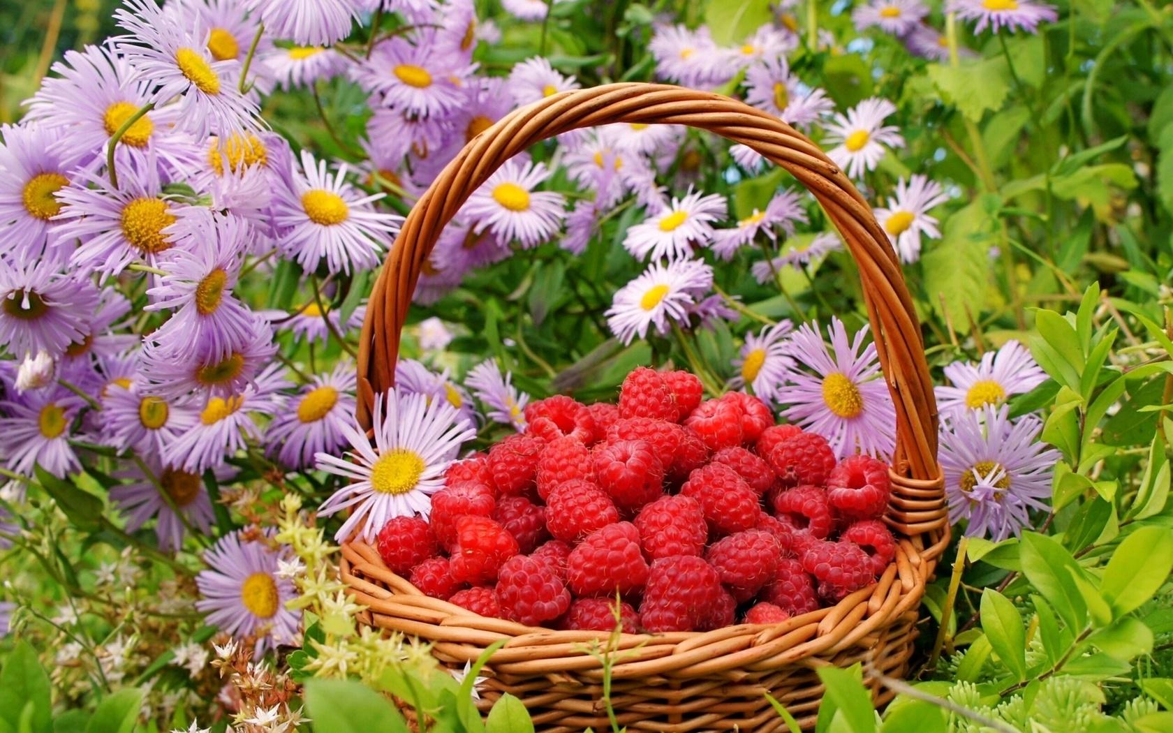 россии доброе утро цветущий июнь картинки использовали три стиля