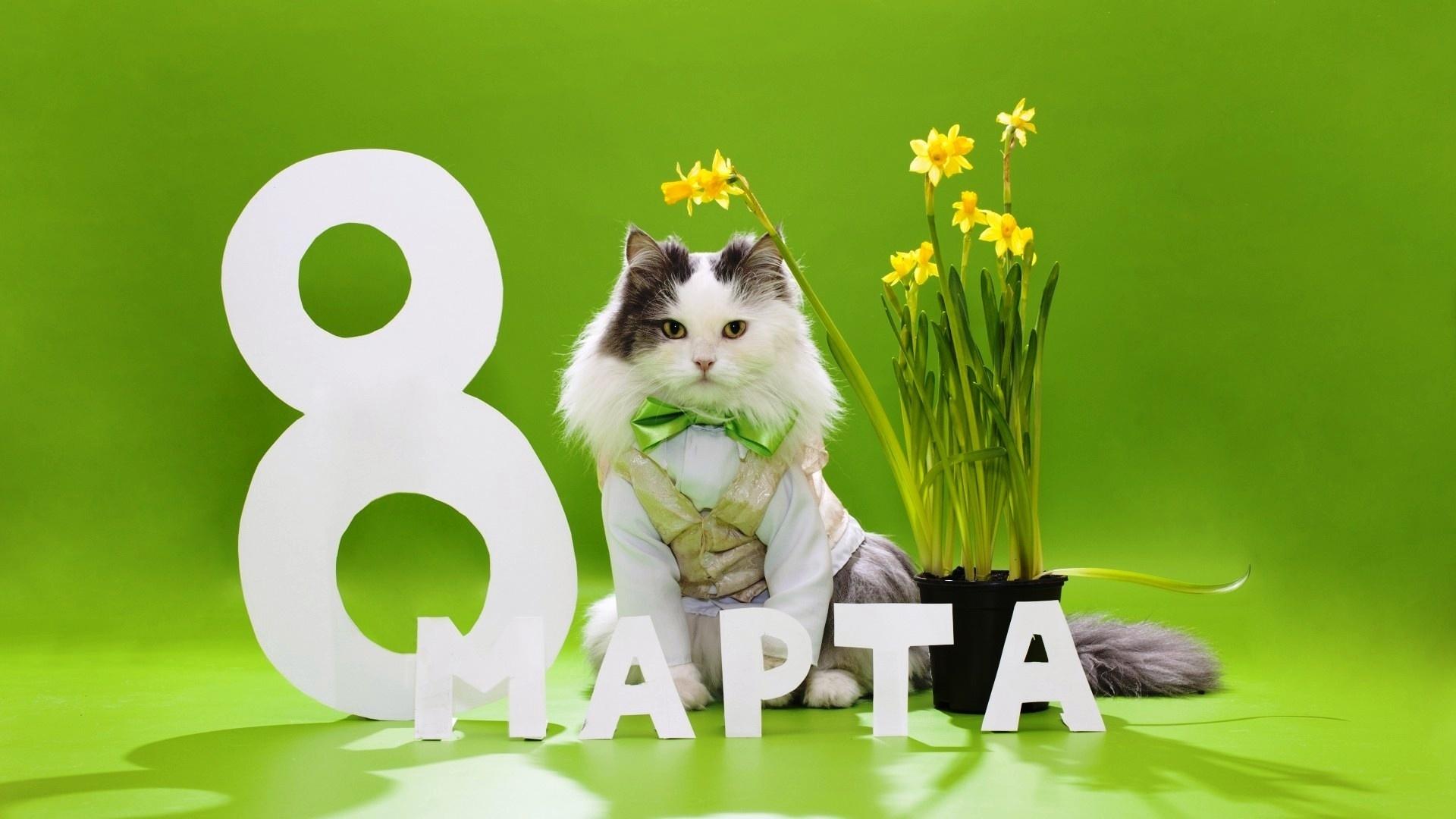 Открытки с котиком на 8 марта, аву самые крутые