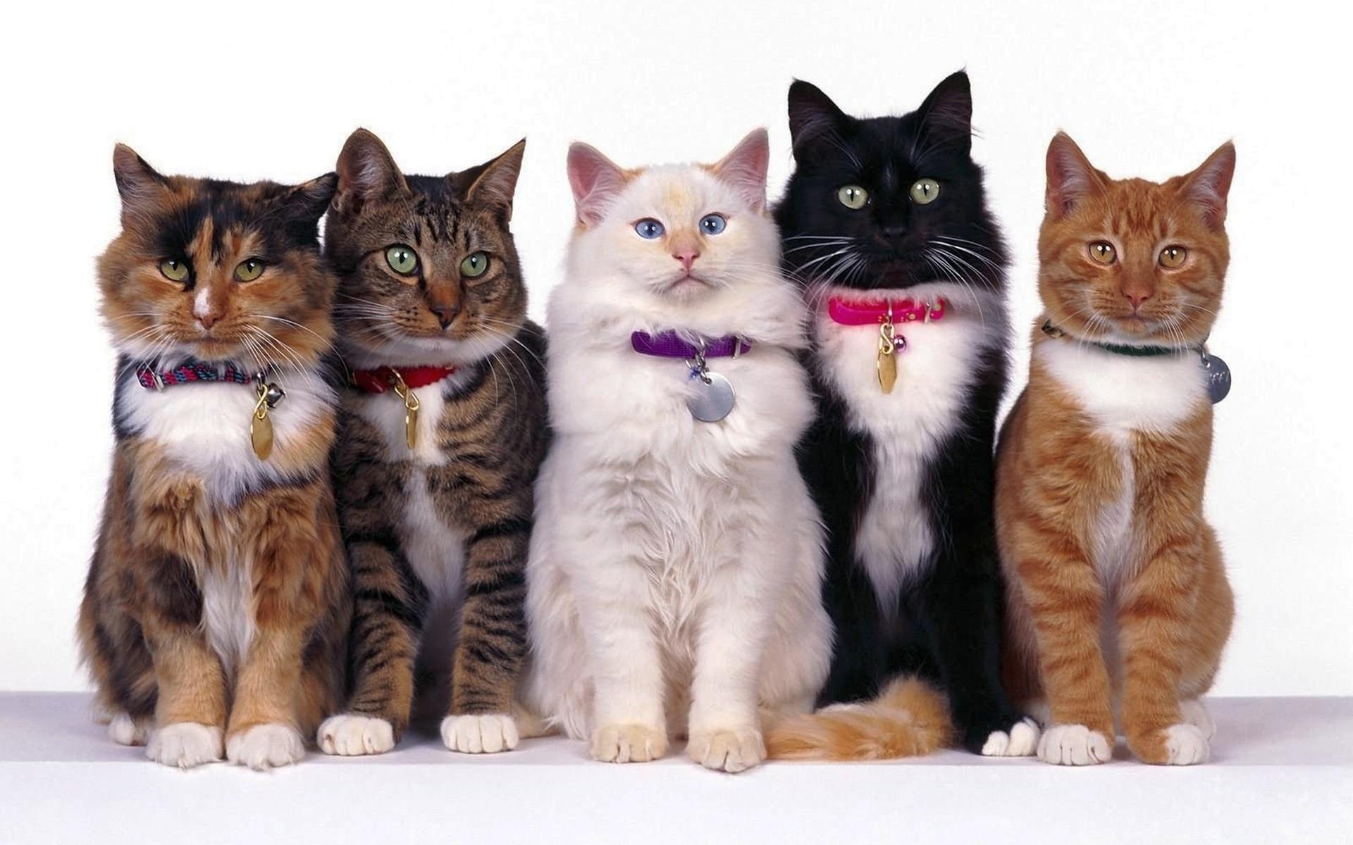 Картинки котов разных