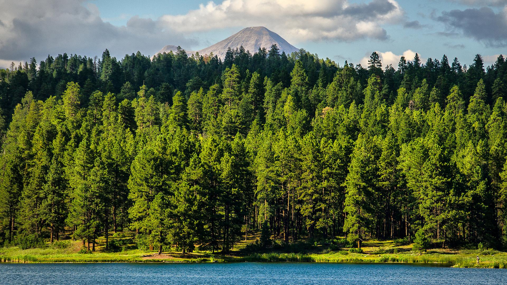 Картинки нескольких лесов