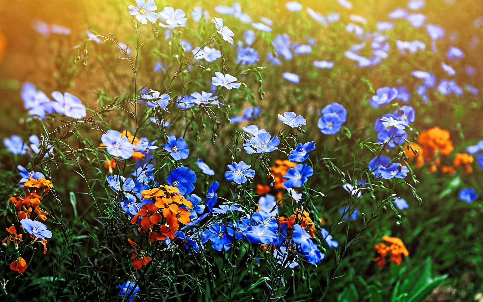 Для, картинки полевые цветы красивые
