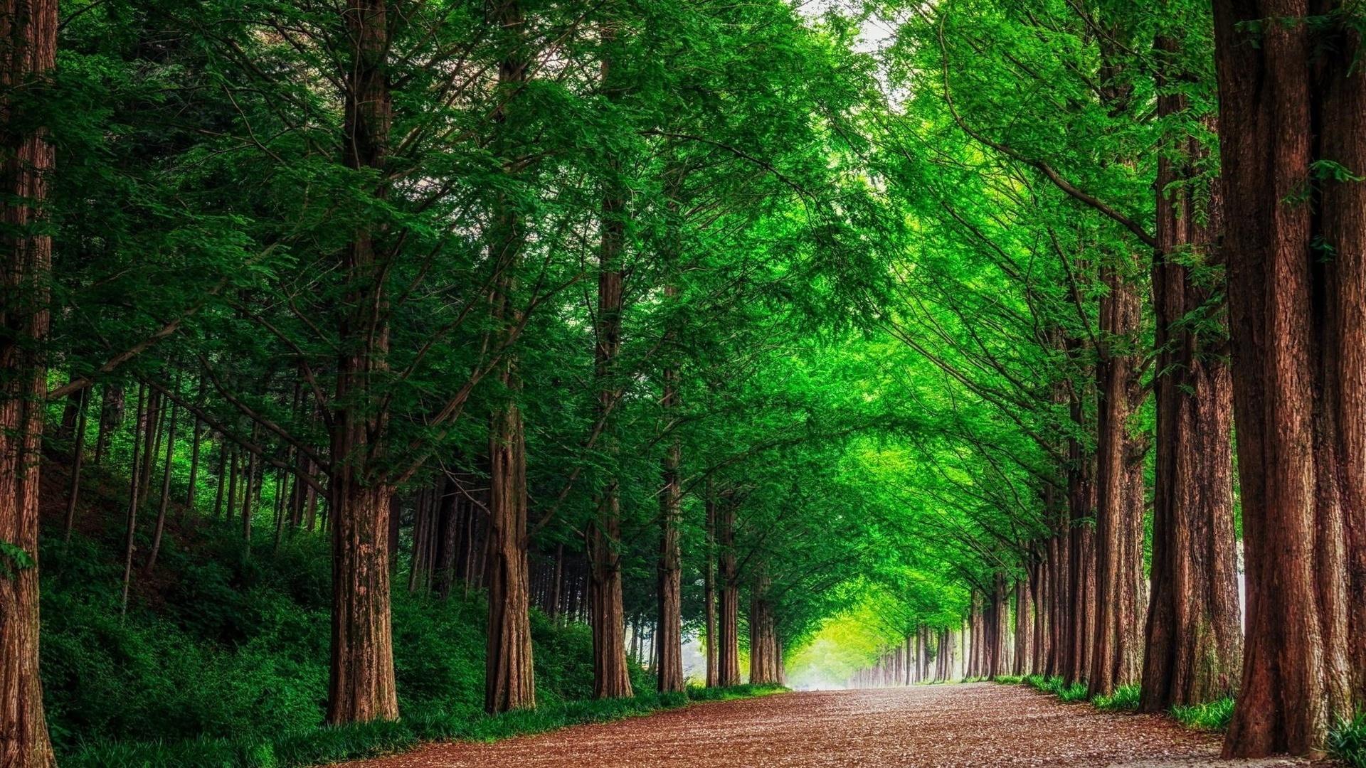 фото на фоне леса - 8