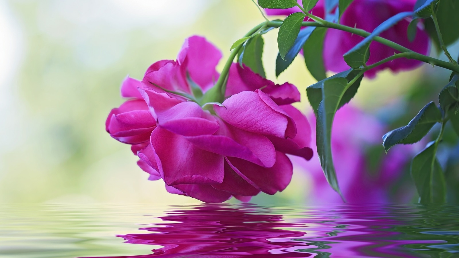 Фото картинки цветы анимация