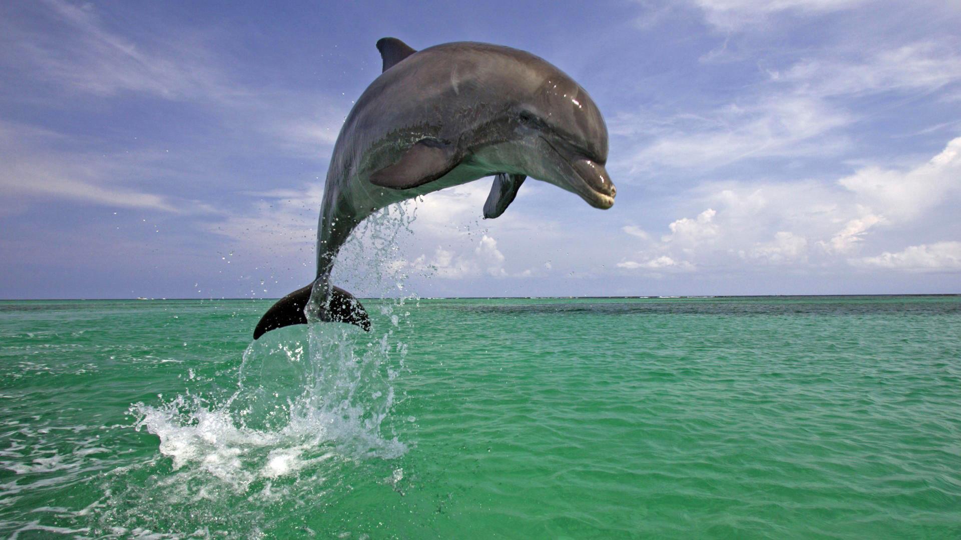 Днем рождения, дельфины фото красивые и смешные