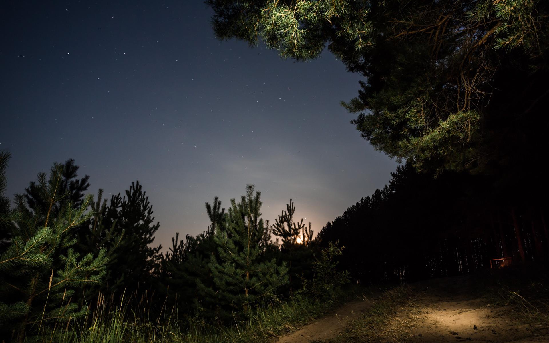 Картинки летняя ночь в лесу, жанры средства выражения