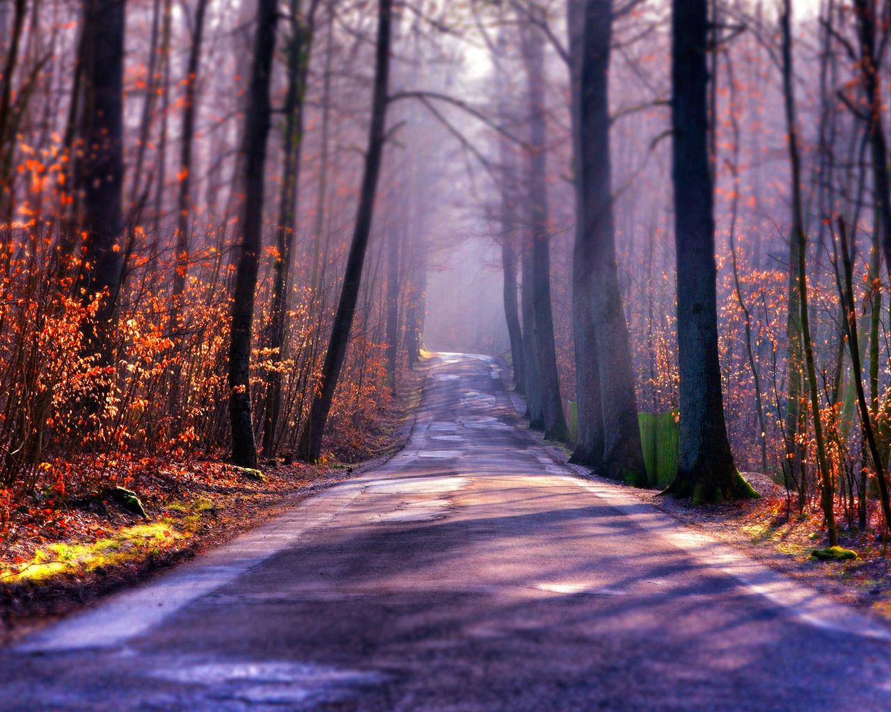 осень, лес, деревья, туман, дорога