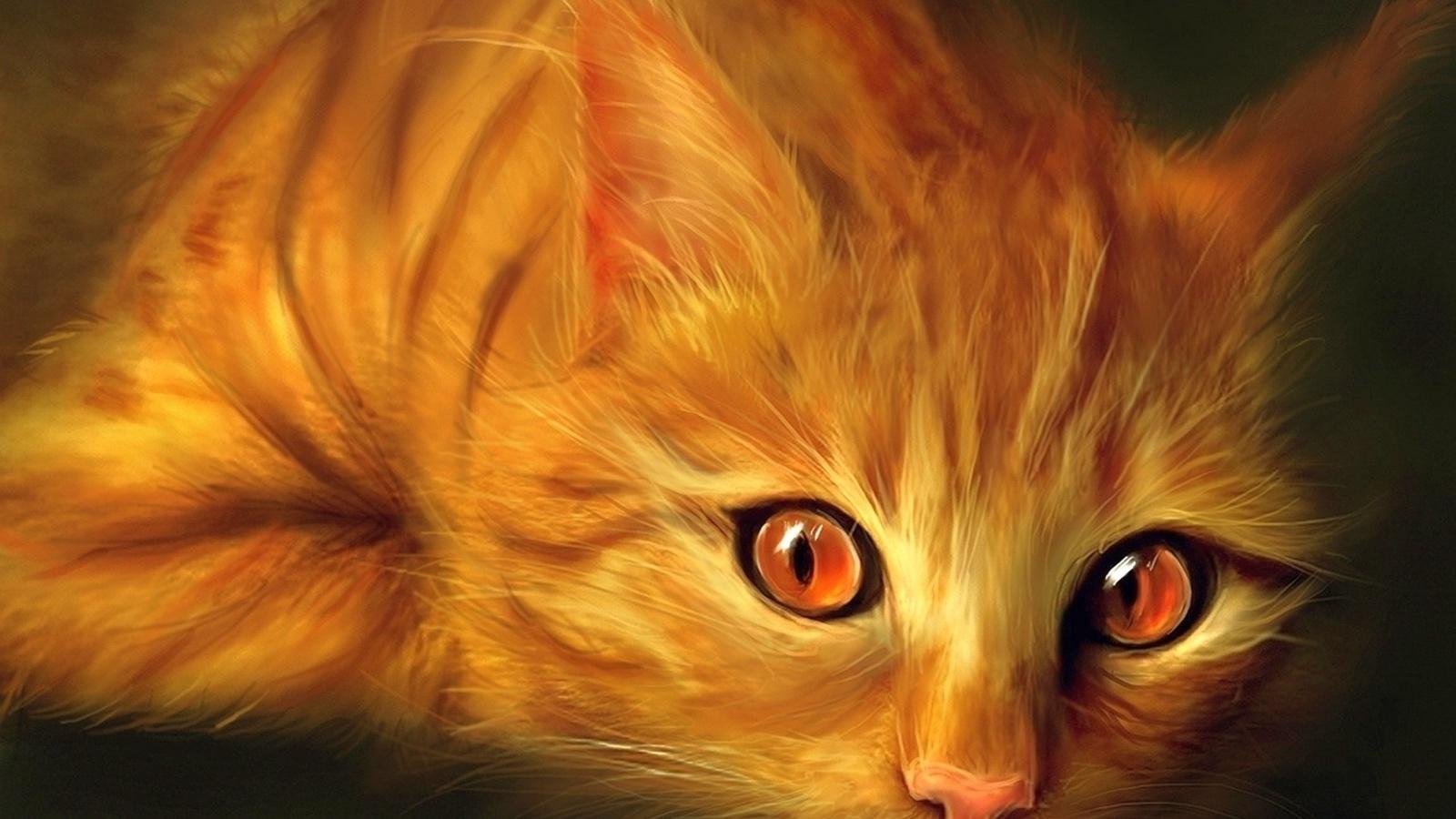 Картинки картинки кошек