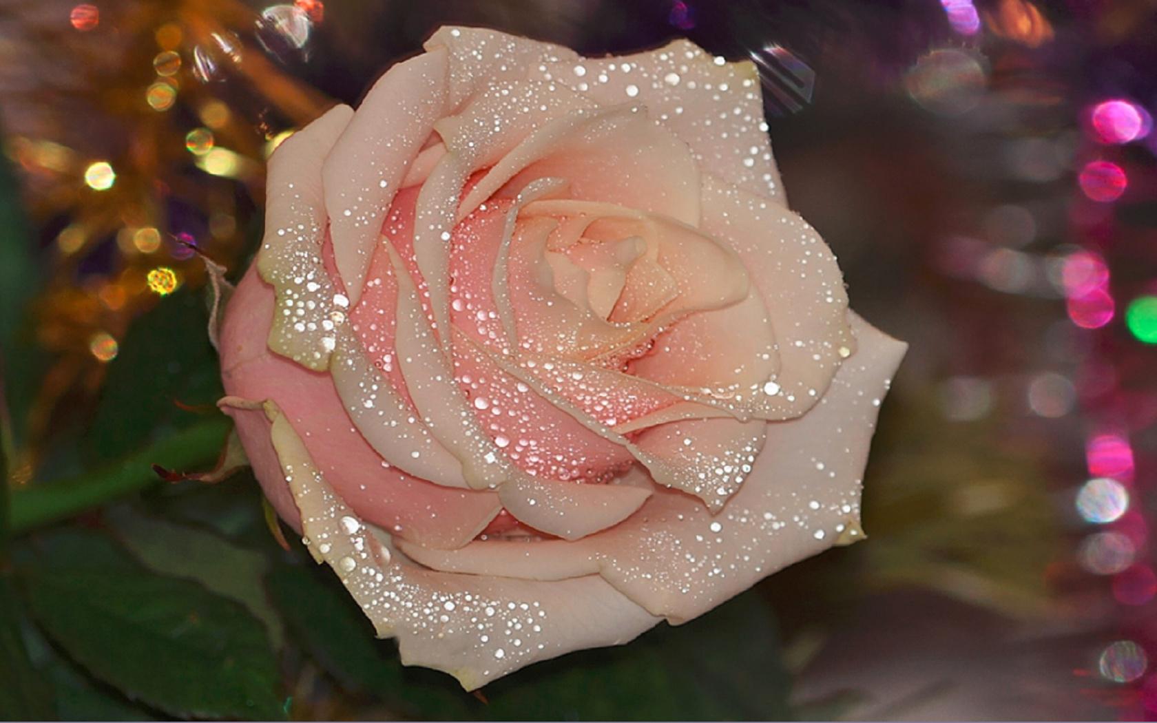 Поздравления днем, картинки блестящие розы