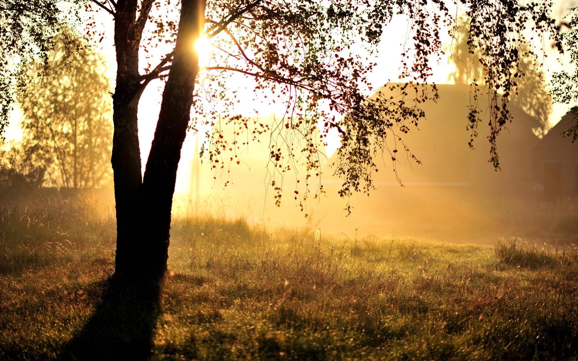 Открытка, картинки утро солнце красота