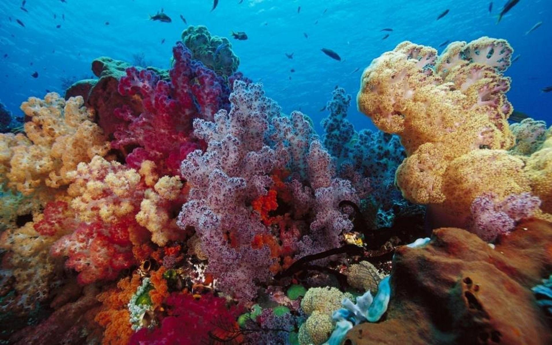 Картинки морской мир на рабочий стол, картинки