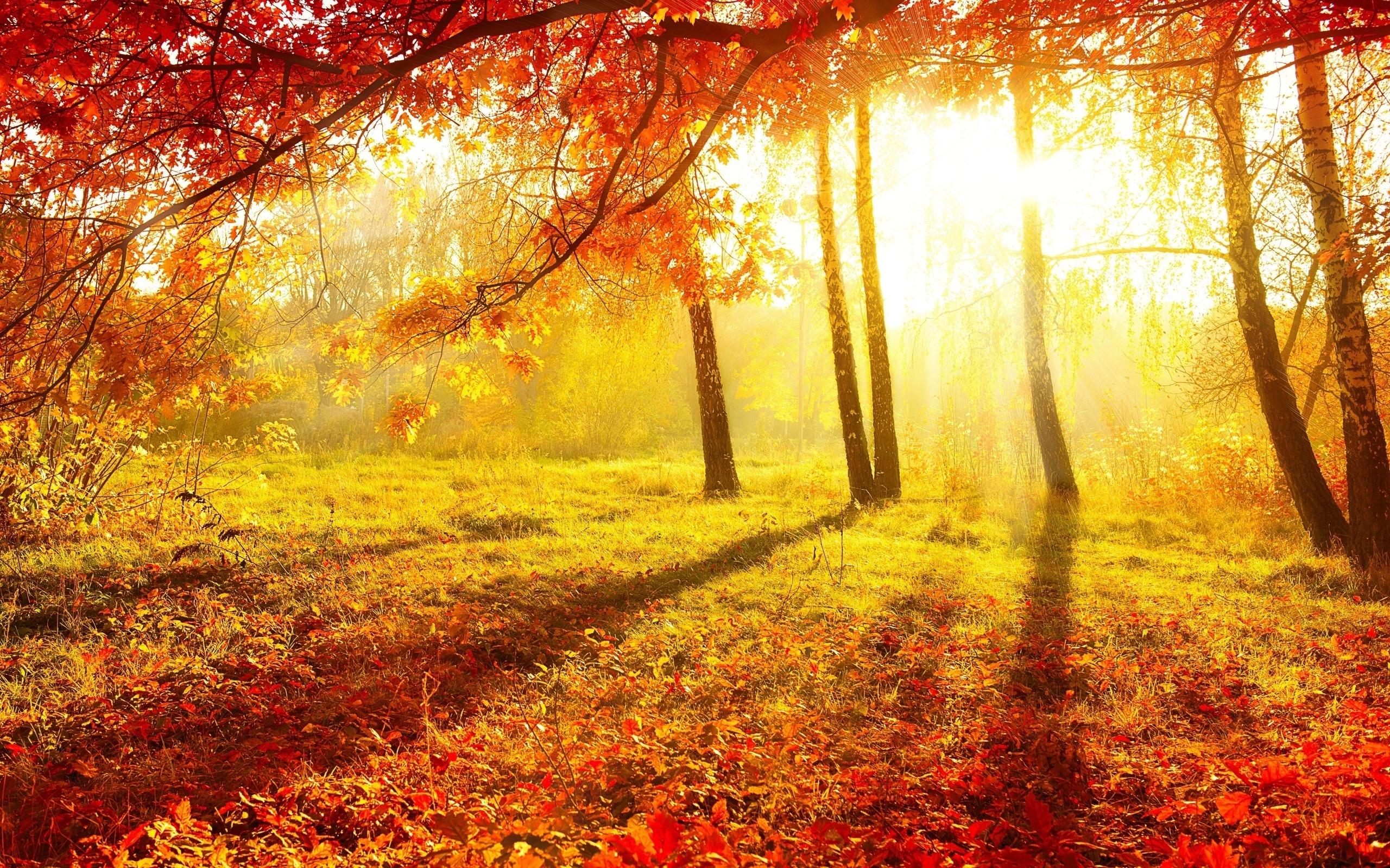 Осенний лес открытки, прикол радость