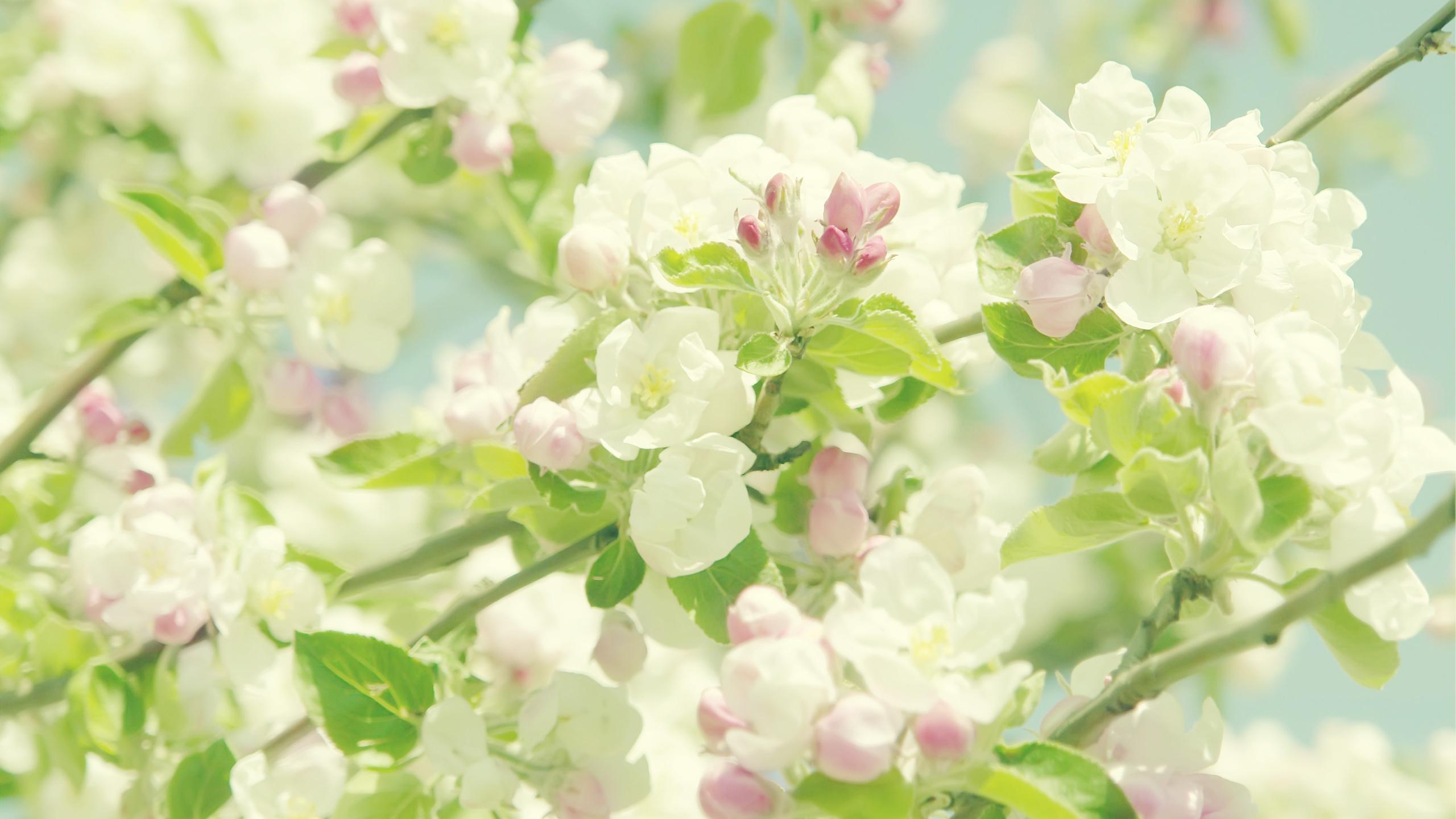 Сады цветут открытки, днем рождения