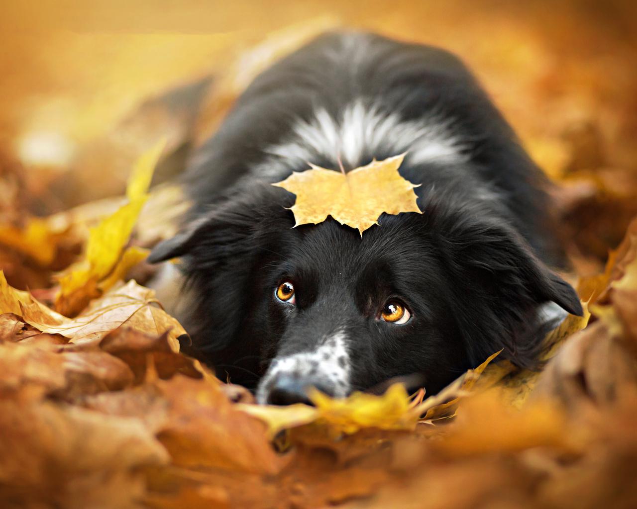 рад, осень на носу картинка языкан