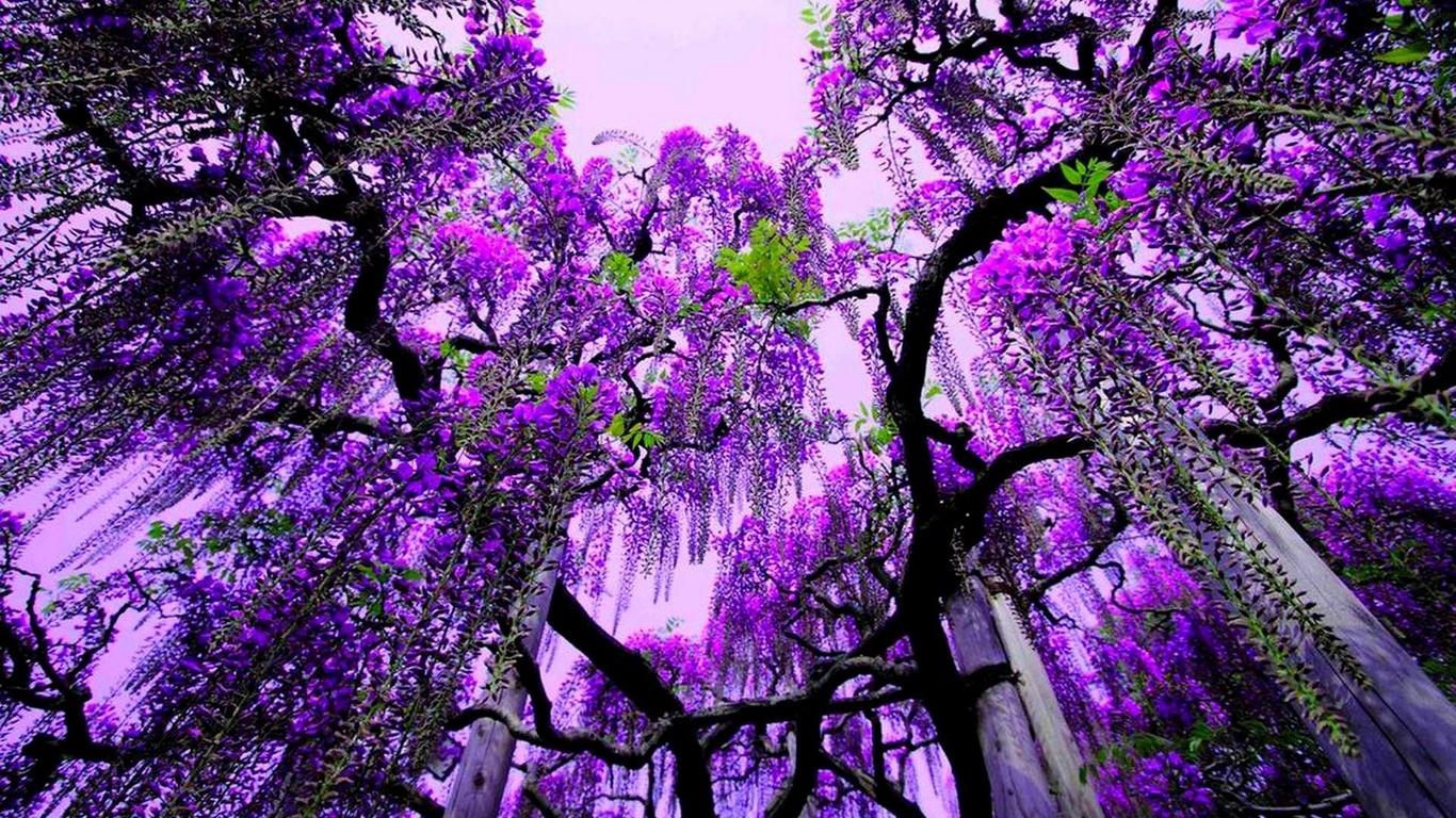 Важные детали сновидения: сорт дерева и его состояние.