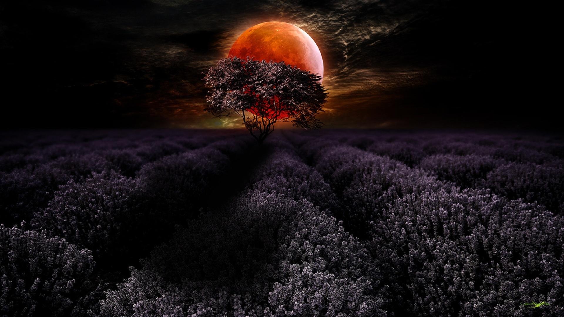 Новым, картинки природа ночью красота