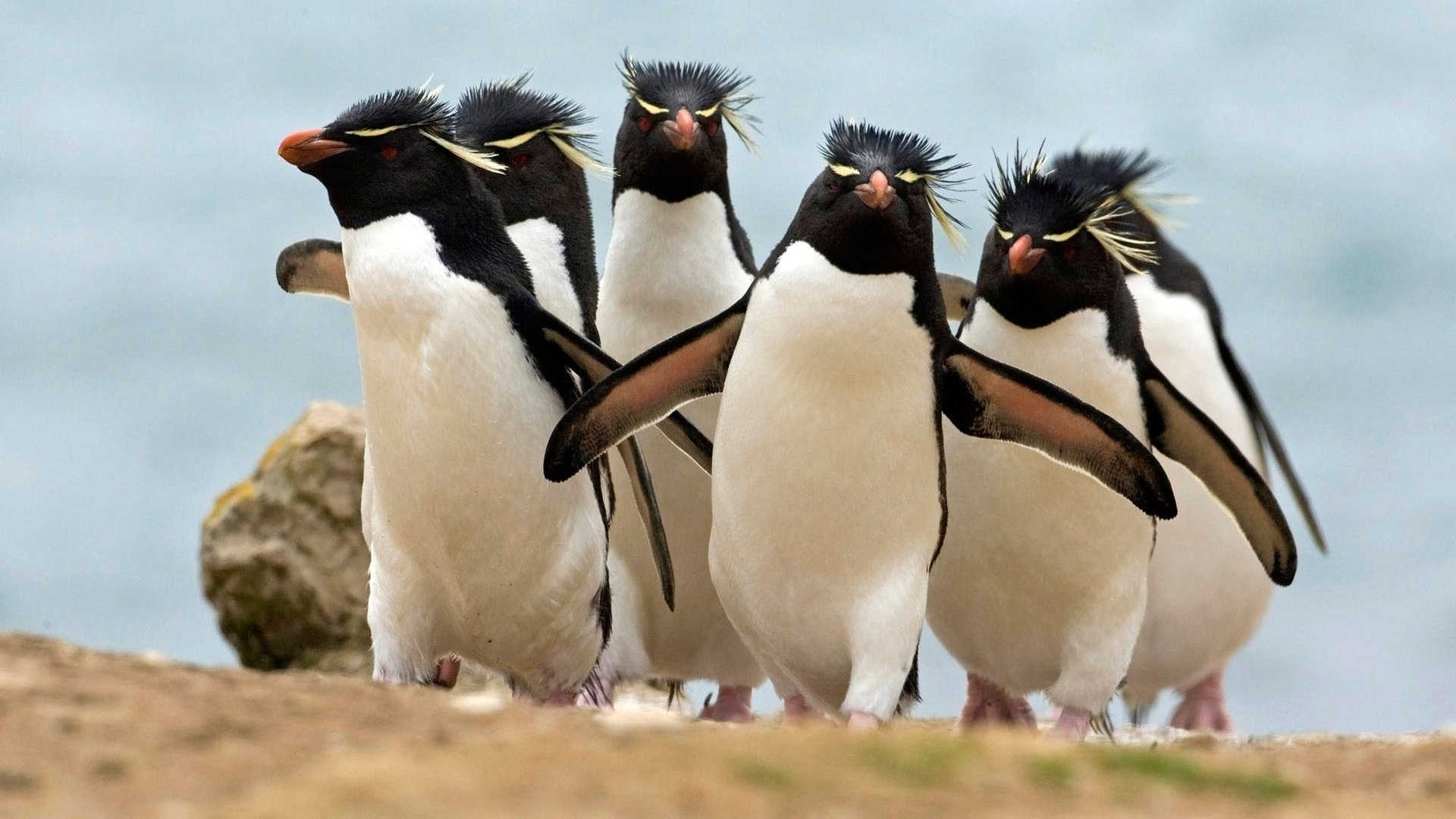 Чайки прикольные, картинки с пингвином смешные