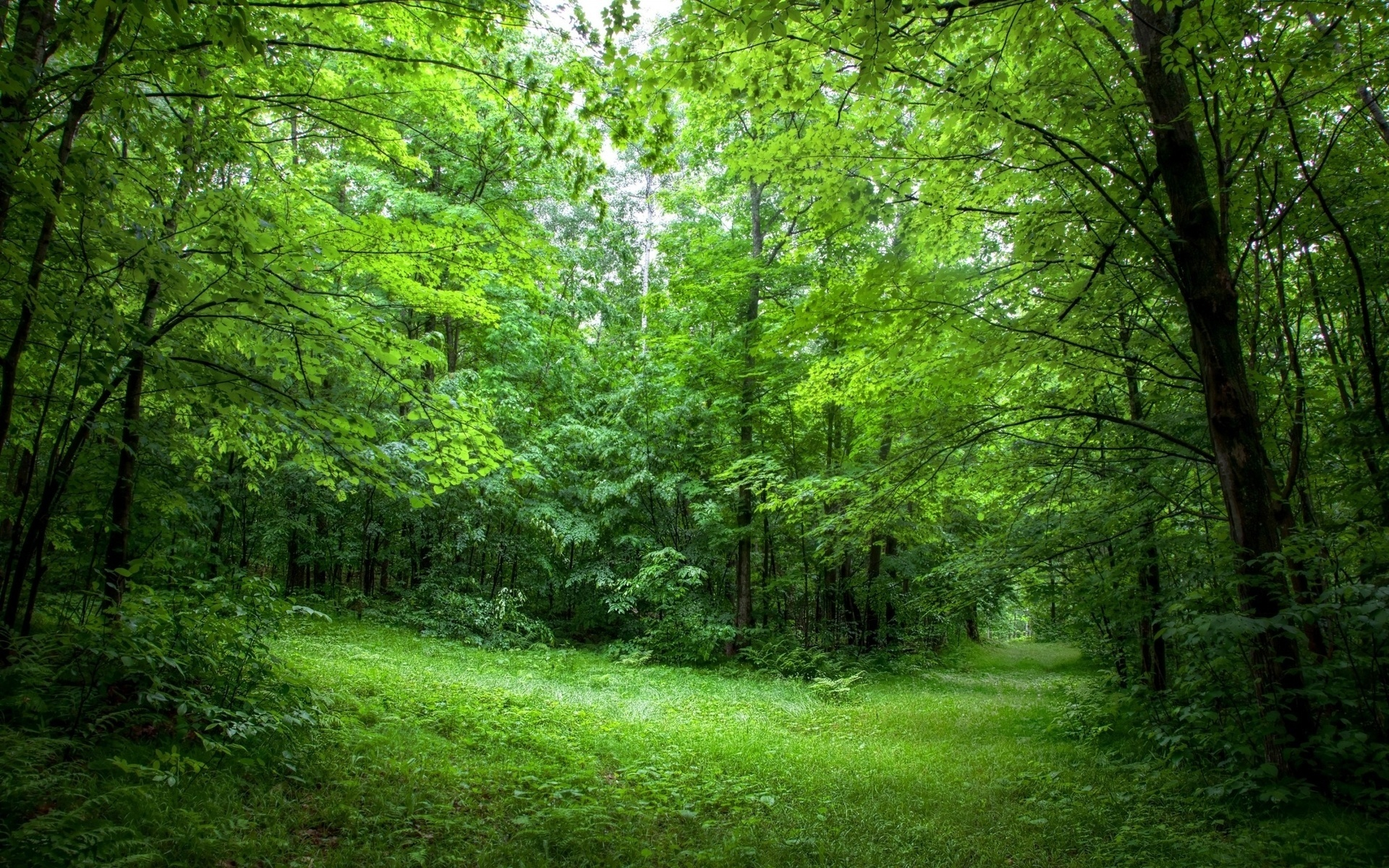фото на фоне леса - 2