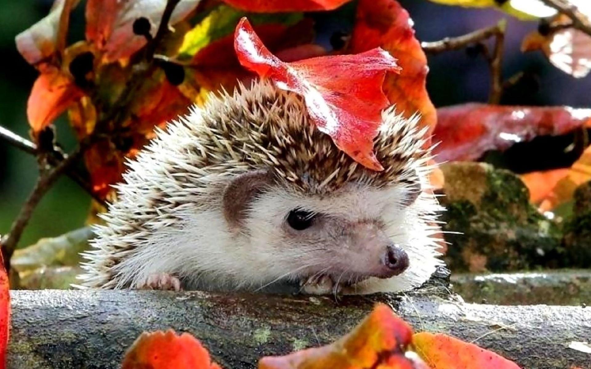 Картинки прикольные осень, красивые картинки карандашом