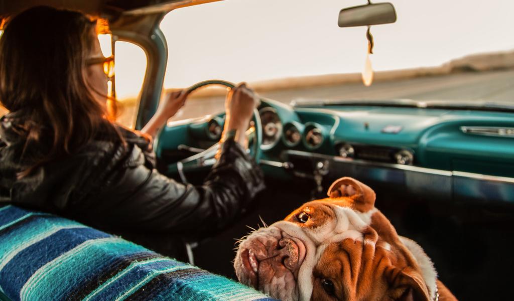 Смешные картинки еду на машине