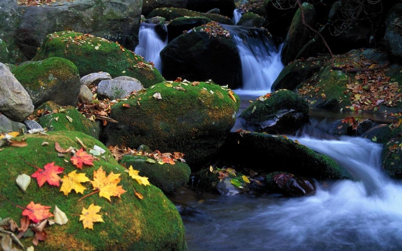 замшелые камни, водопад, листья, осень