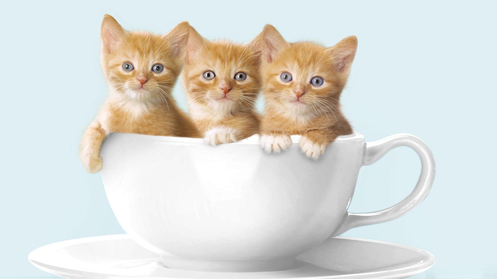 Доброе утро картинки красивые животные с надписями, картинки для