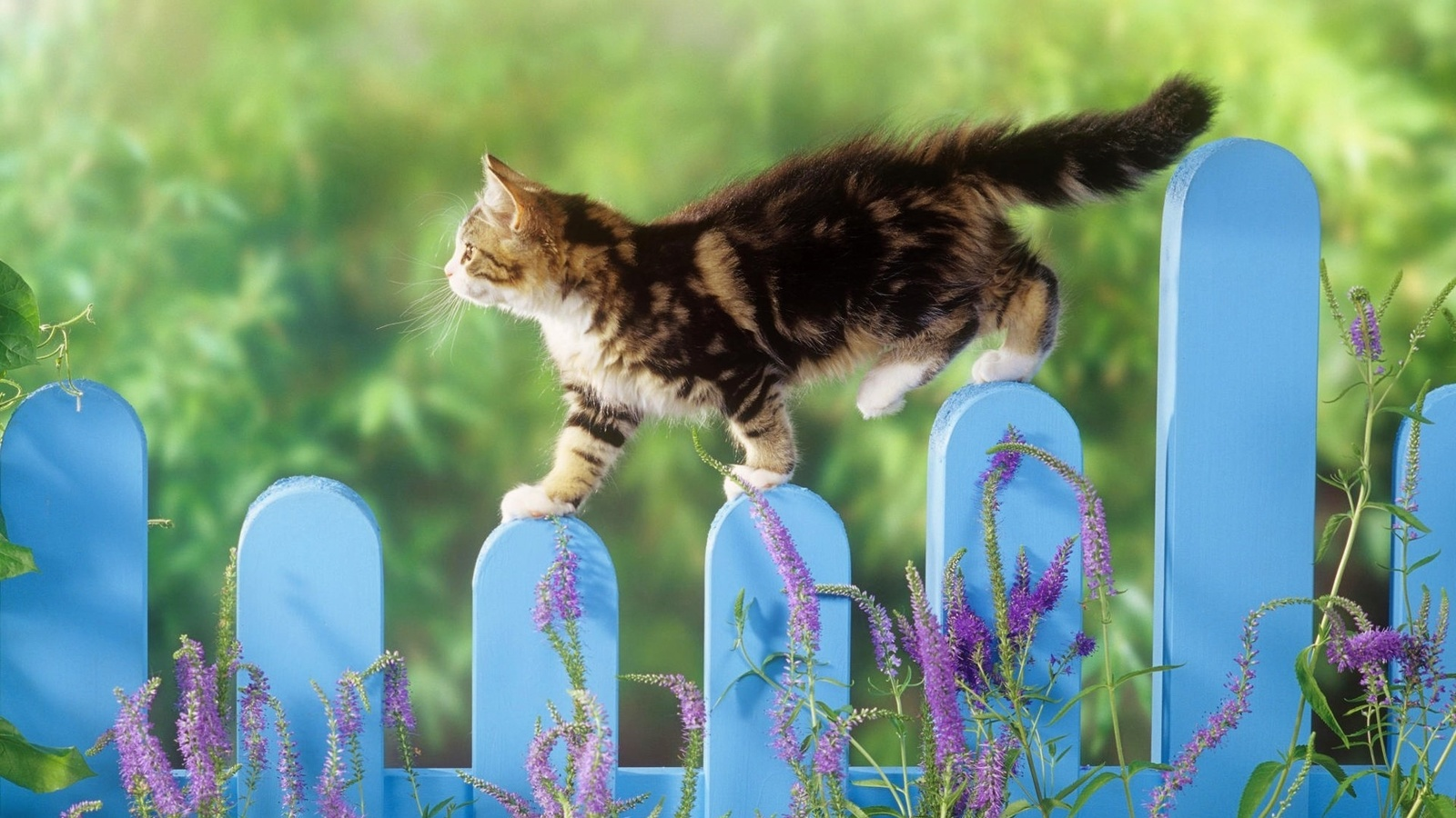 Позитивные картинки открытки, картинки котов очках