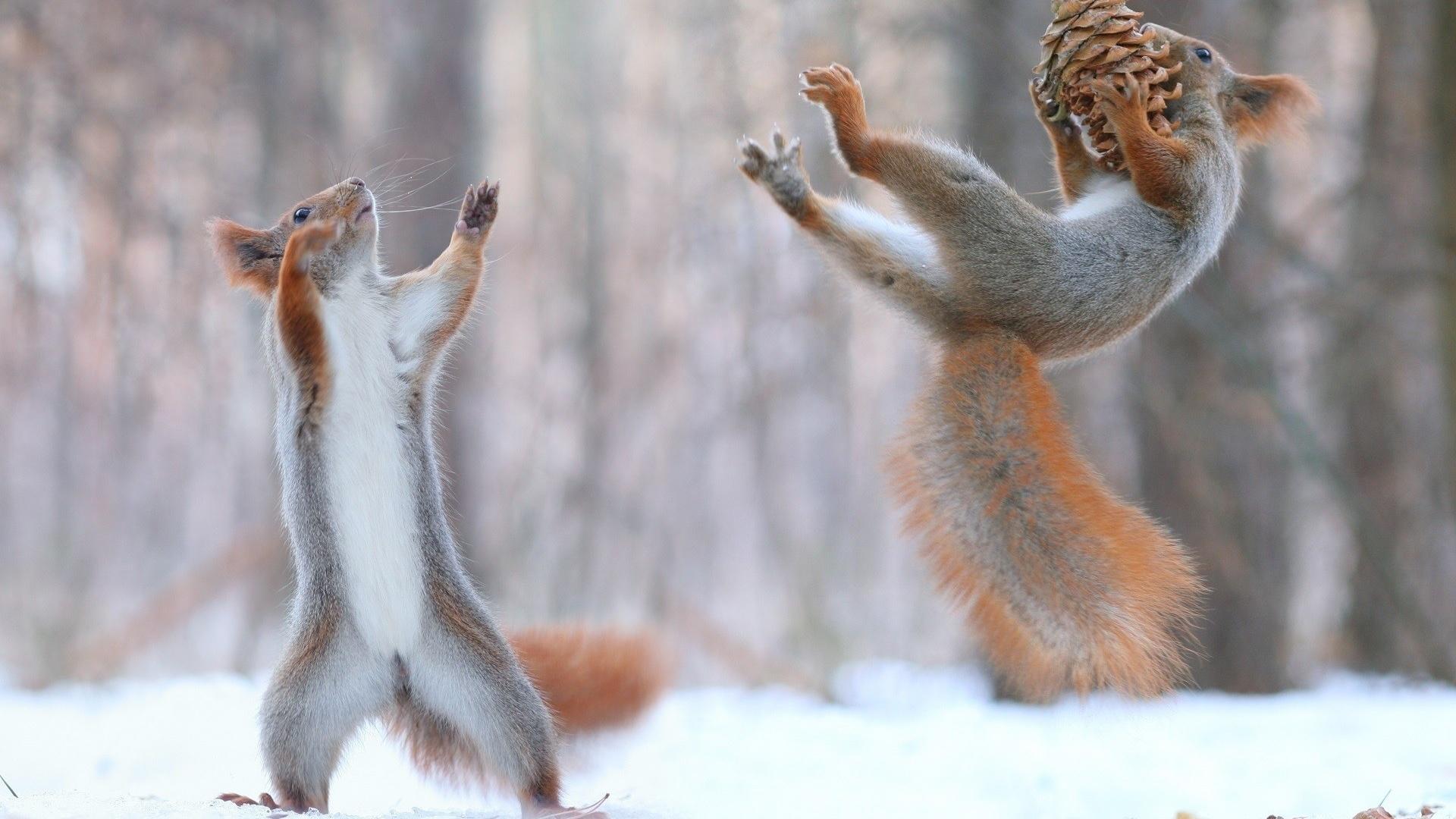 Прикольные картинки с надписями с природой, марта советские хорошем
