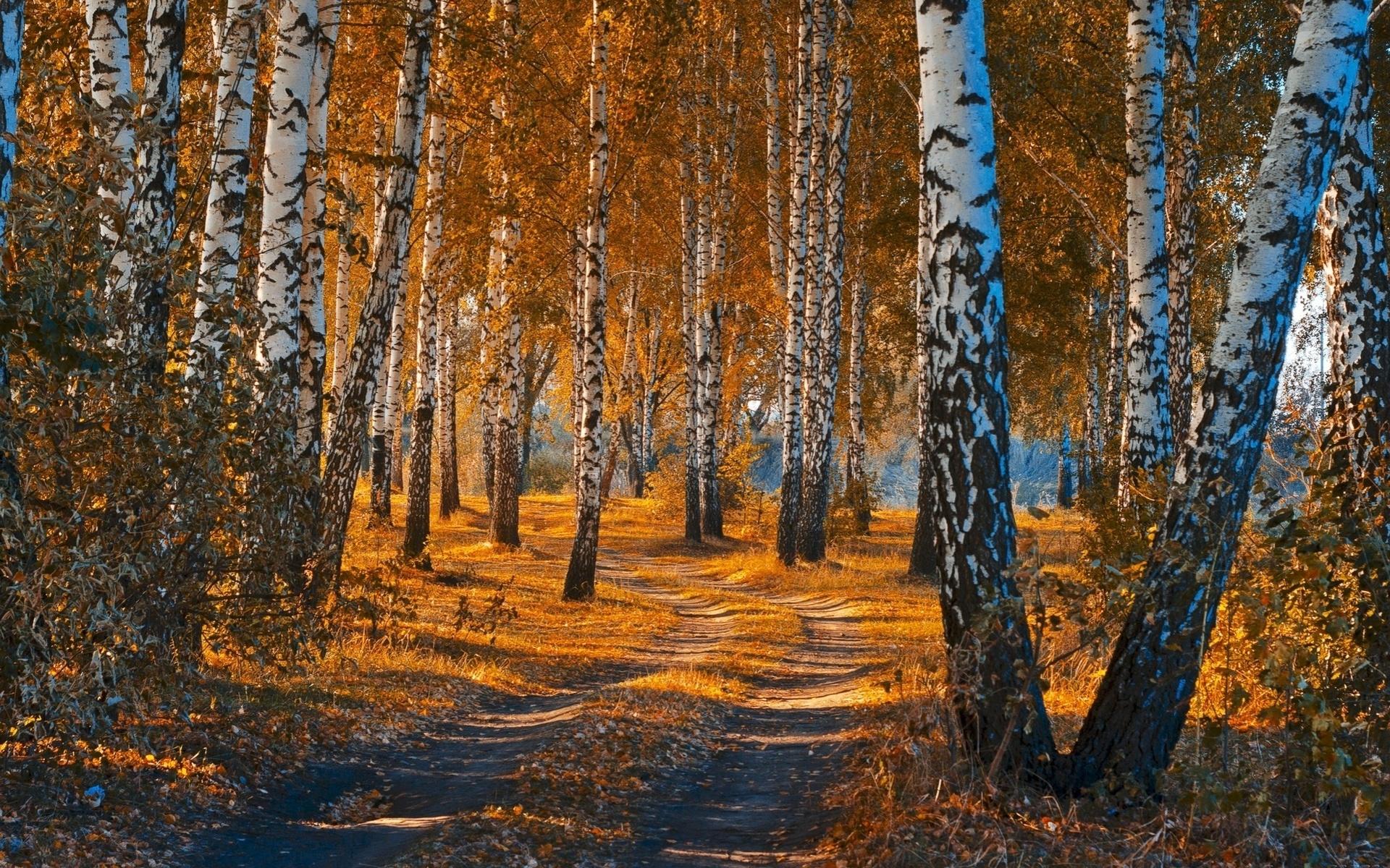 список наиболее фото природа осень в лесах рощах россии несет