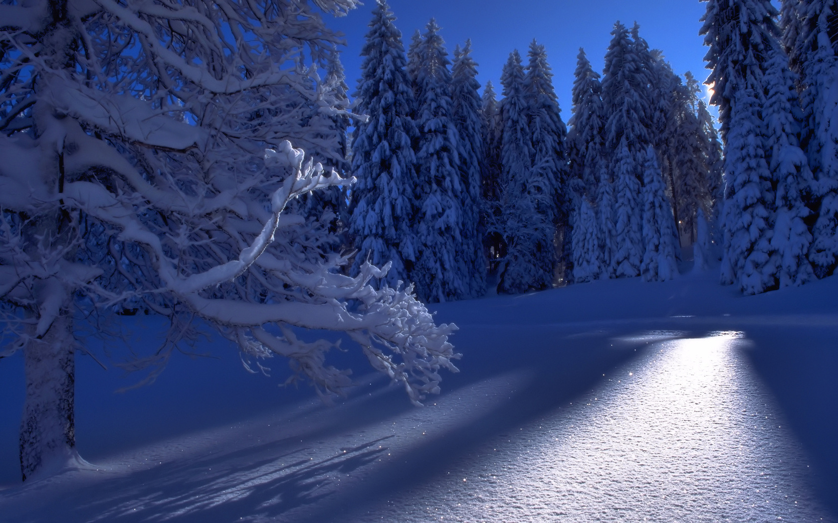 Картинка зимний лес анимация, юбилеем женщине розы