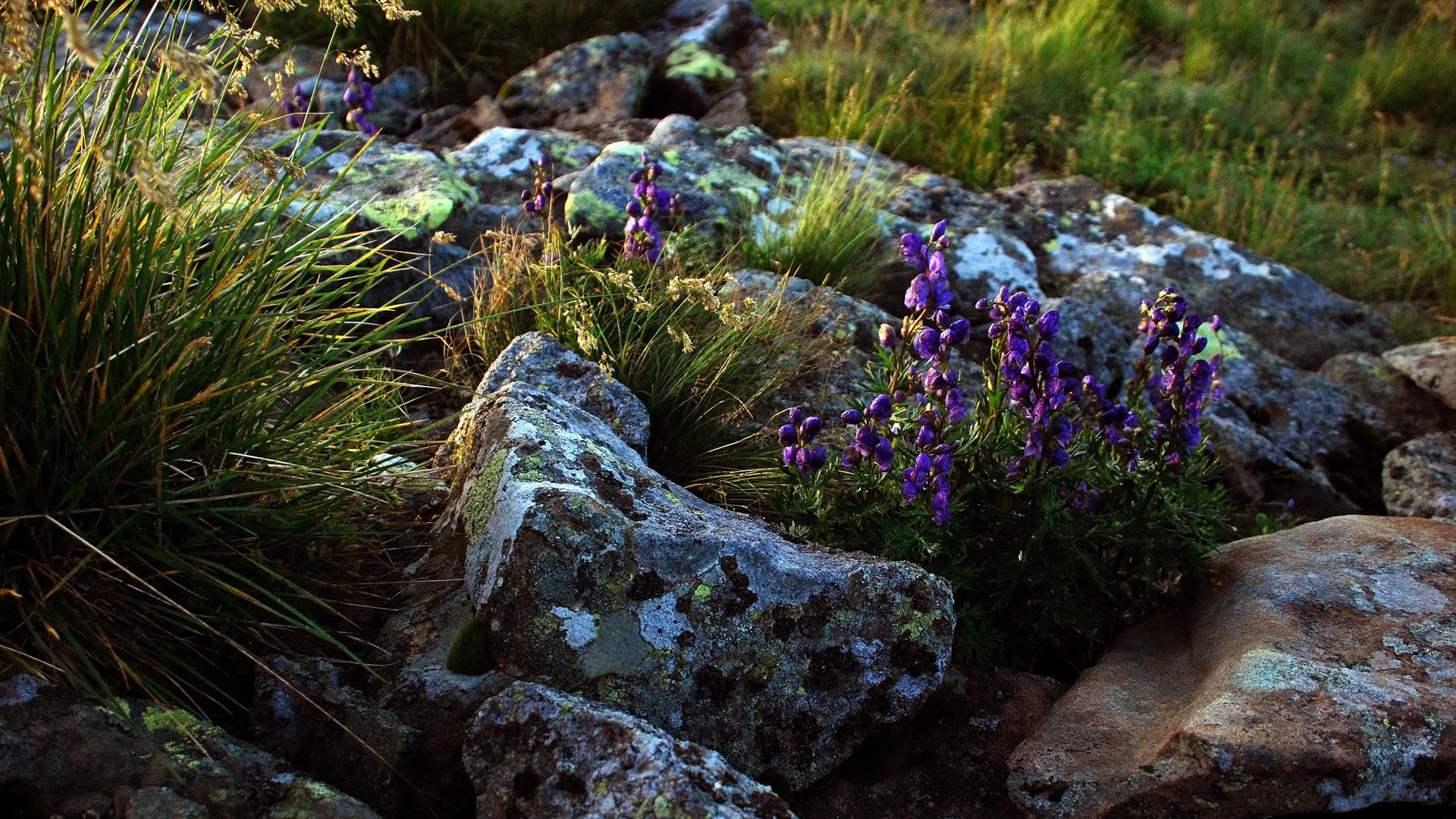 картинки каменного цветочками комплект его поставки