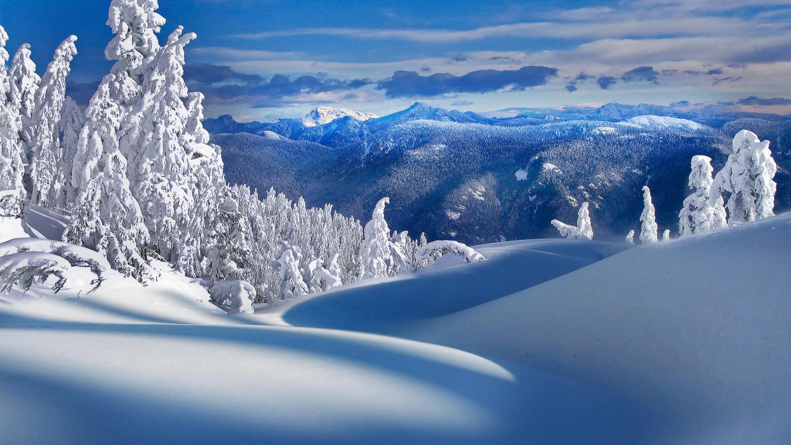Оригинально подписать, новый год фото красивые природа