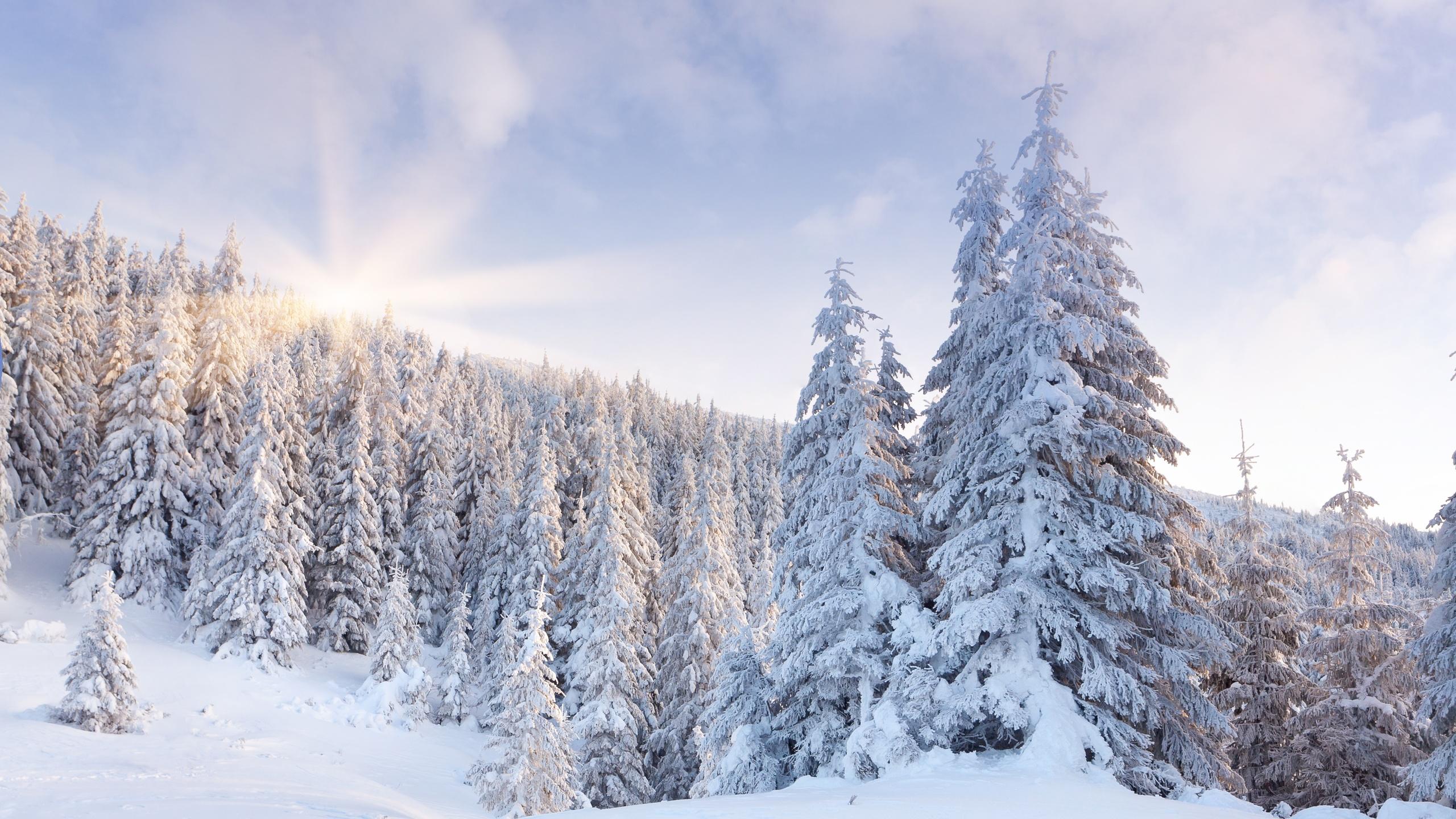 зима, лес, рассвет, ёлки, снег, солнце