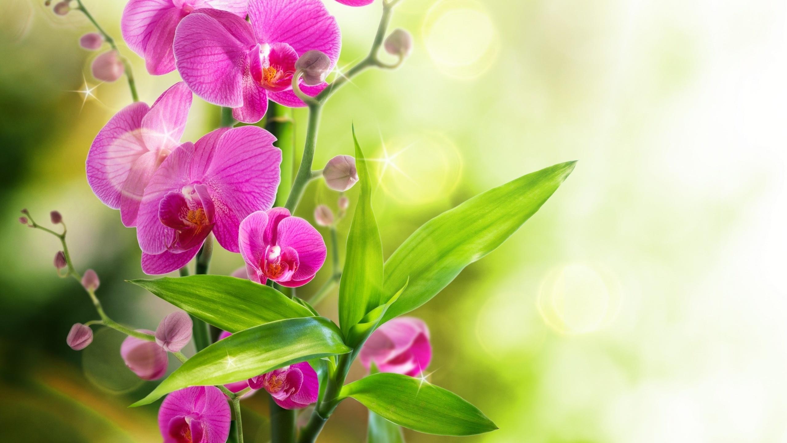 Красиво, открытки с орхидеи