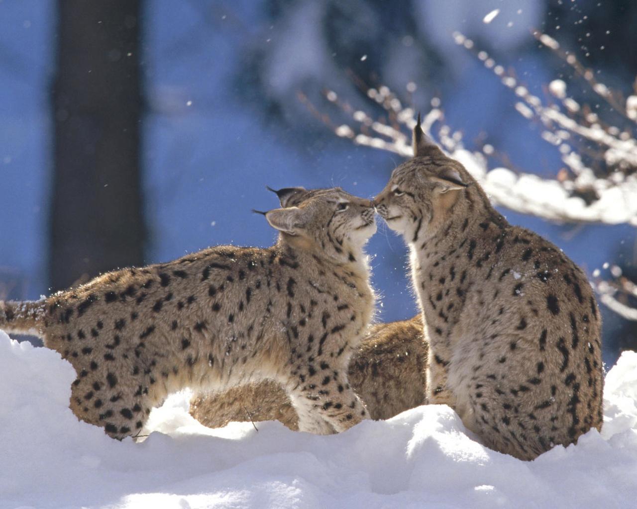 Картинки зима животные любовь, мальчик