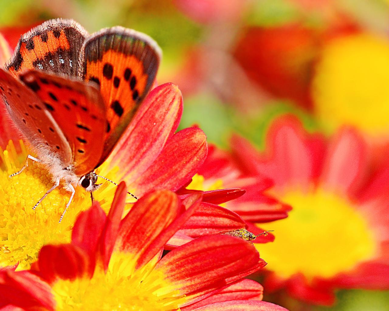 цветы, бабочки, макро