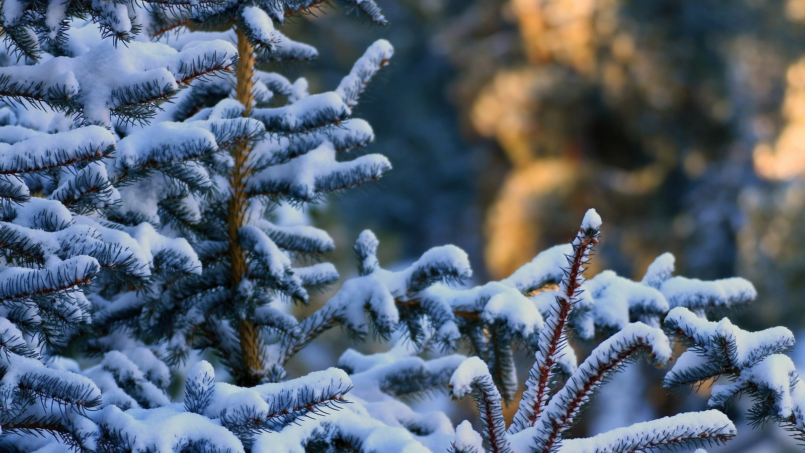 Открытка ель и снег