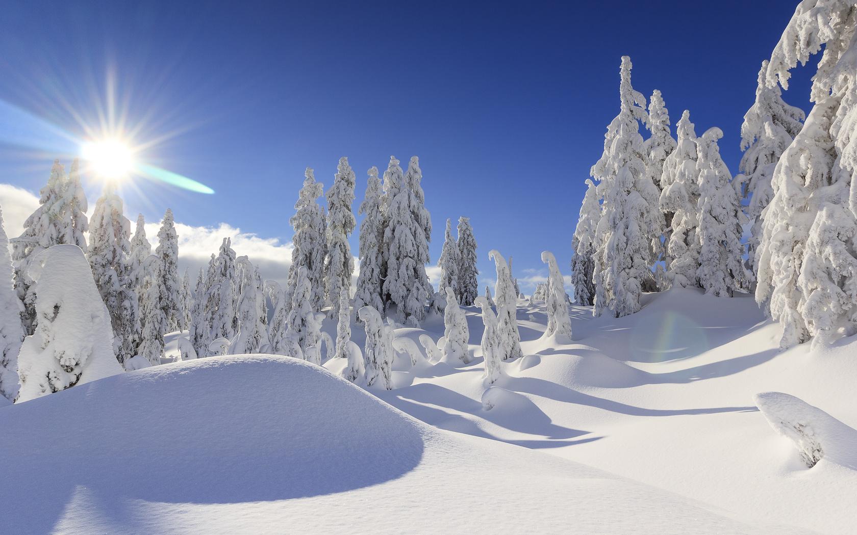 зима, .канада, ванкувер, снег, сугробы, солнце, лучи, ели, канада
