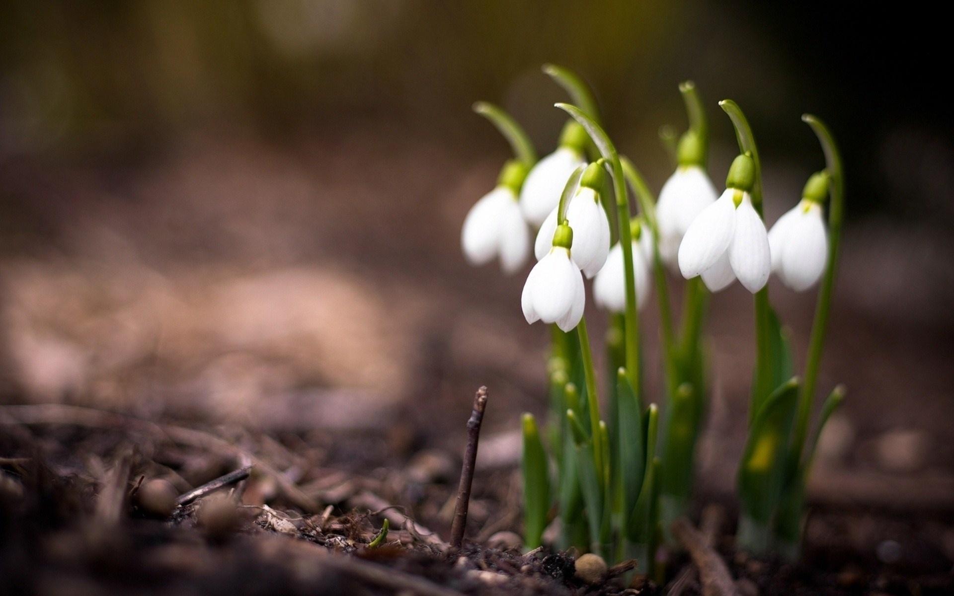 Картинка с весной красивая
