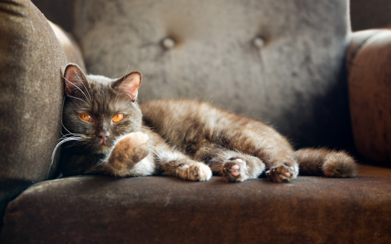 Котики в картинках котиков смотрим, самой красивой