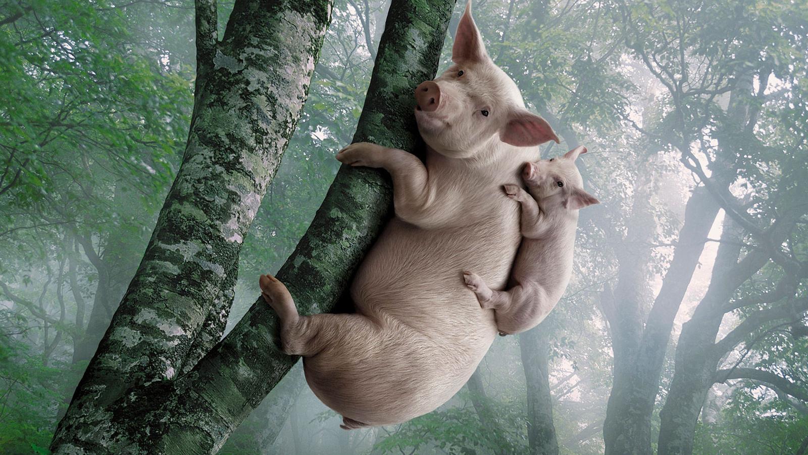 Смешные картинки на дереве